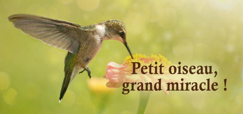 Front slider - Petit oiseau, grand miracle!
