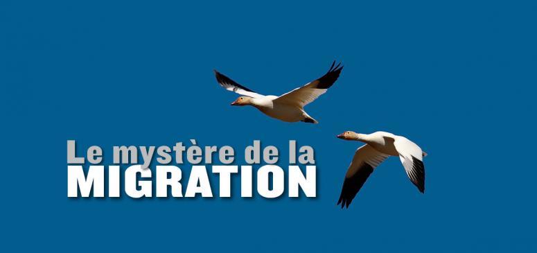 Front slider - La migration