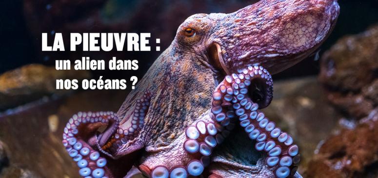 Front slider - La pieuvre